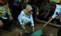 """Bupati Lampung Timur """"Mainan Lesung & Batu"""", Di Purbolinggo"""