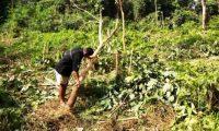 Warga Resah Puluhan Gajah Datang dan Merusak Lahan Pertanian